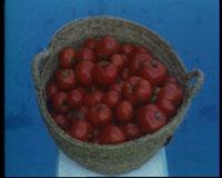 pool tomatoes