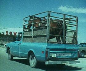 horse in pickup