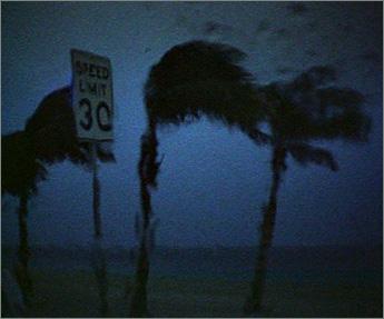 Fla.-Storm-palms